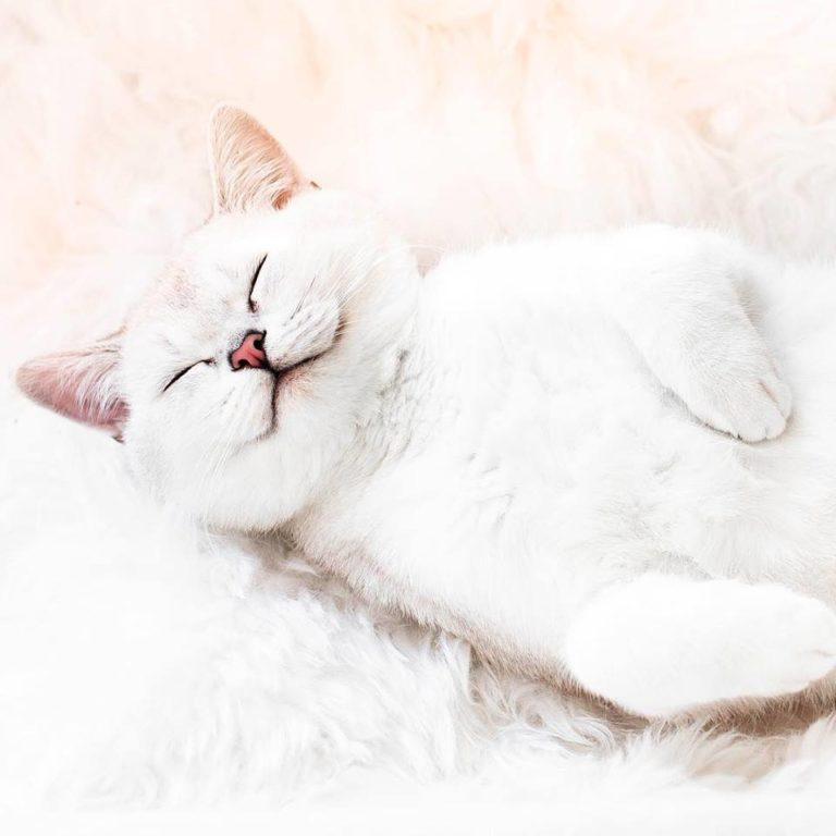 gatto lyo (11)