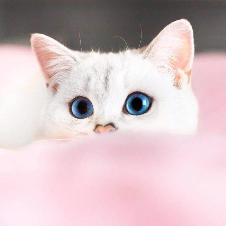 gatto lyo (12)