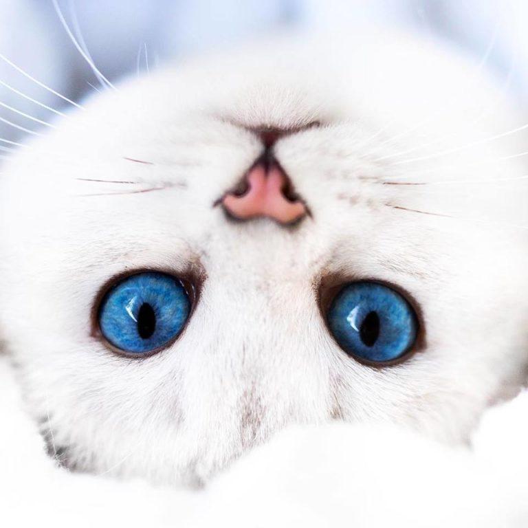 gatto lyo (14)