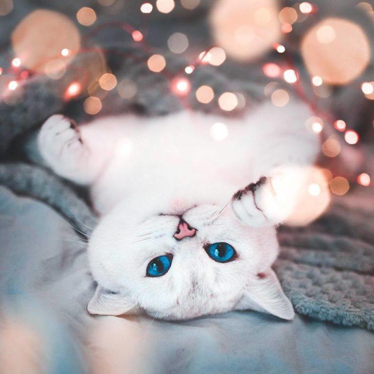 gatto lyo (3)