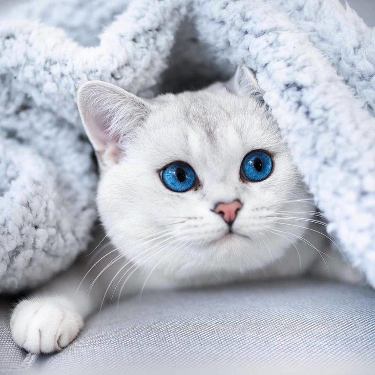 gatto lyo (5)