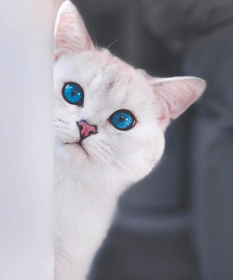 gatto lyo (7)