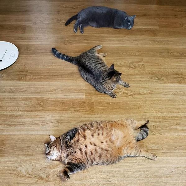 gatto manggo (7)