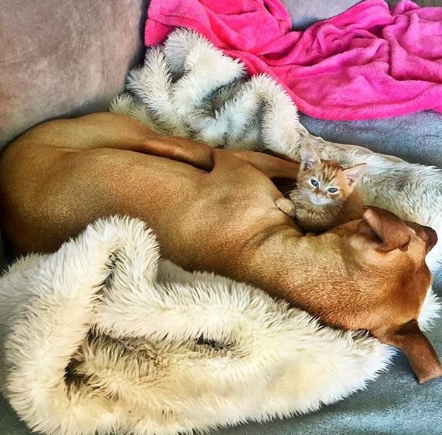 cane bubba gatto rue (1)