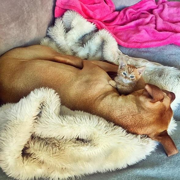 cane bubba gatto rue (11)