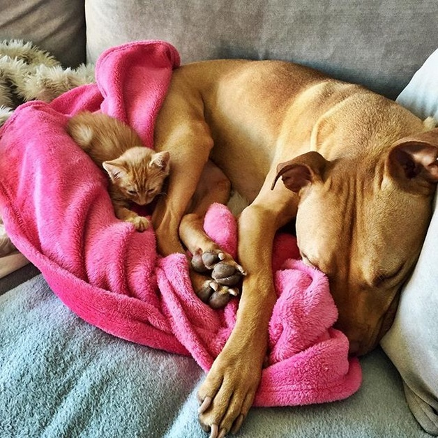 cane bubba gatto rue (2)