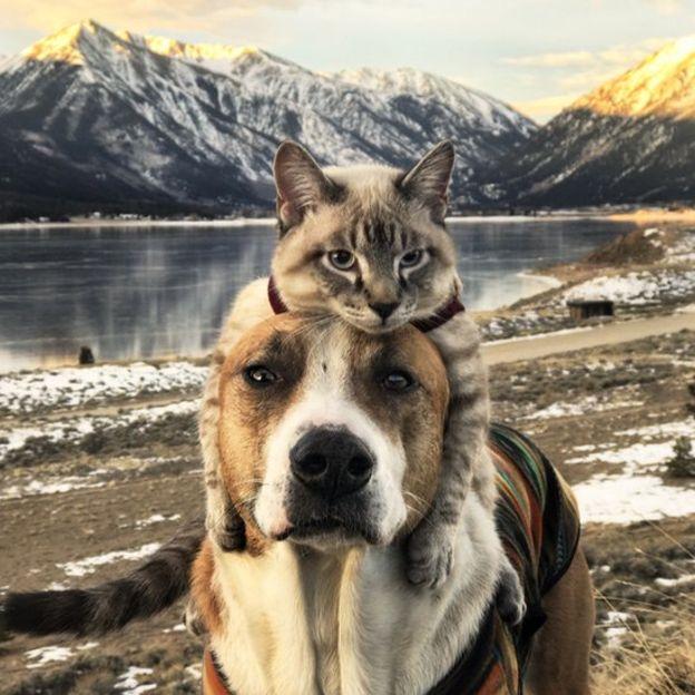 cane gatto henry baloo (1)