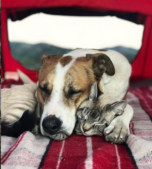 cane gatto henry baloo (13)