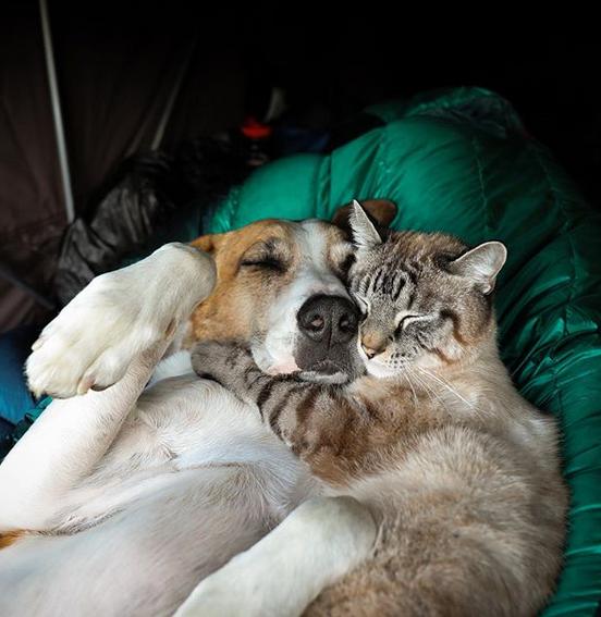 cane gatto henry baloo (14)