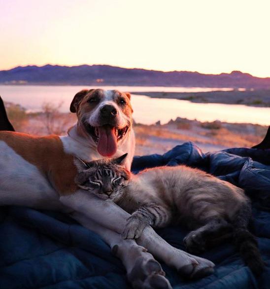 cane gatto henry baloo (16)