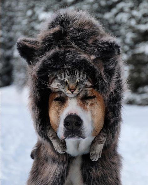 cane gatto henry baloo (18)