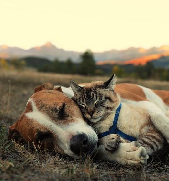 cane gatto henry baloo (3)