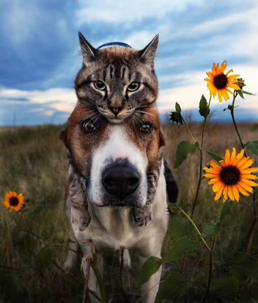 cane gatto henry baloo (7)