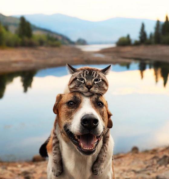 cane gatto henry baloo (8)