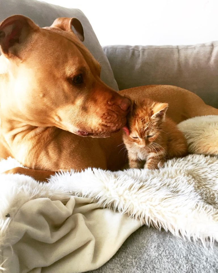gatto cane (11)