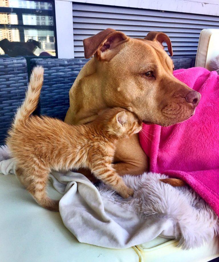 gatto cane (3)