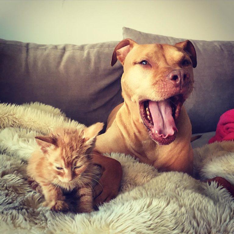 gatto cane (7)