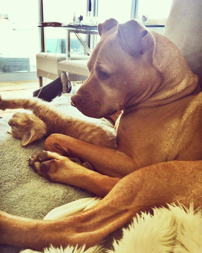 gatto cane (9)