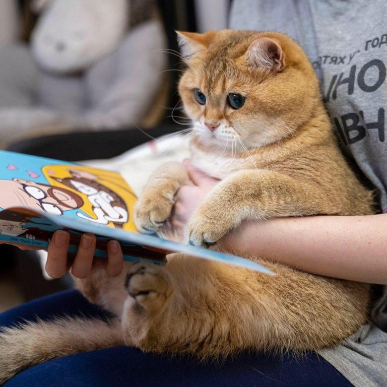 gatto hosico (12)