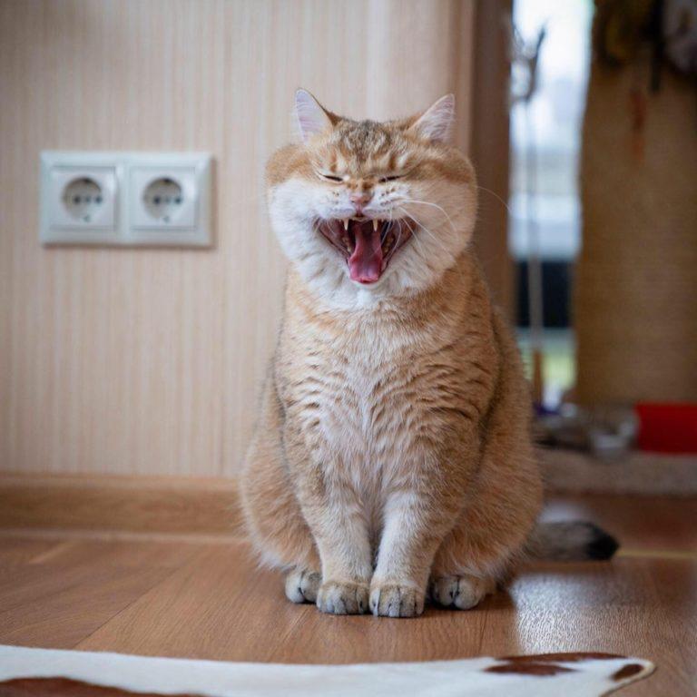 gatto hosico (13)