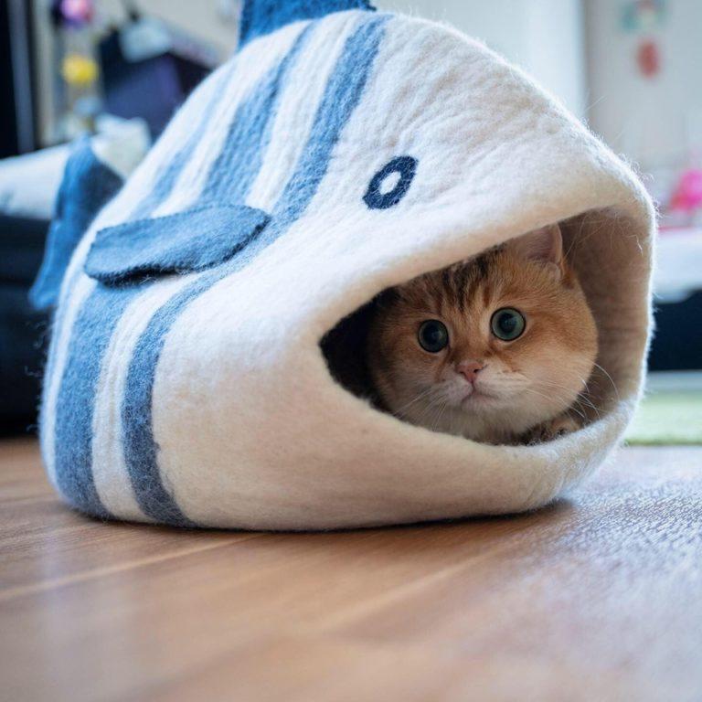 gatto hosico (14)