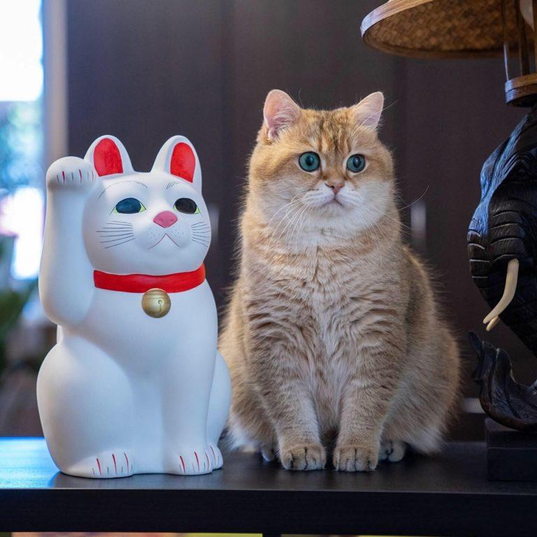 gatto hosico (15)
