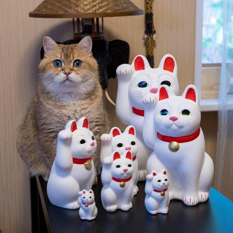 gatto hosico (16)