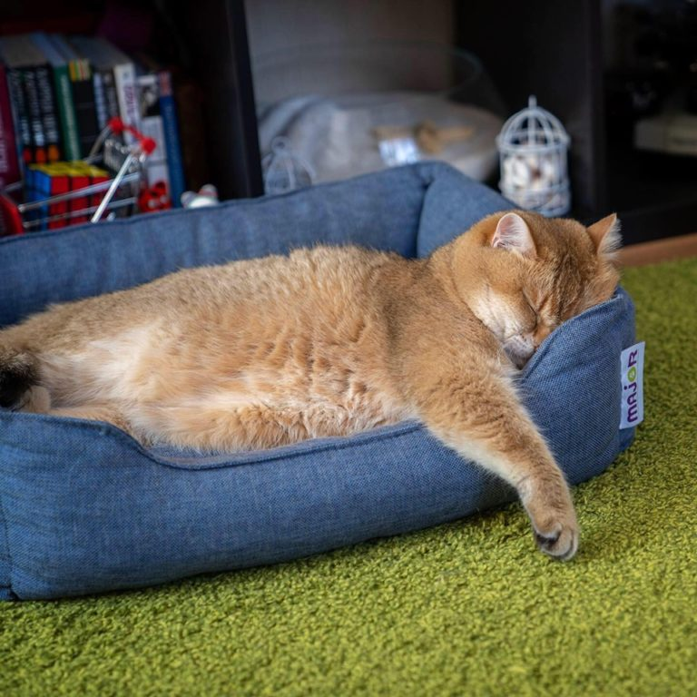gatto hosico (17)