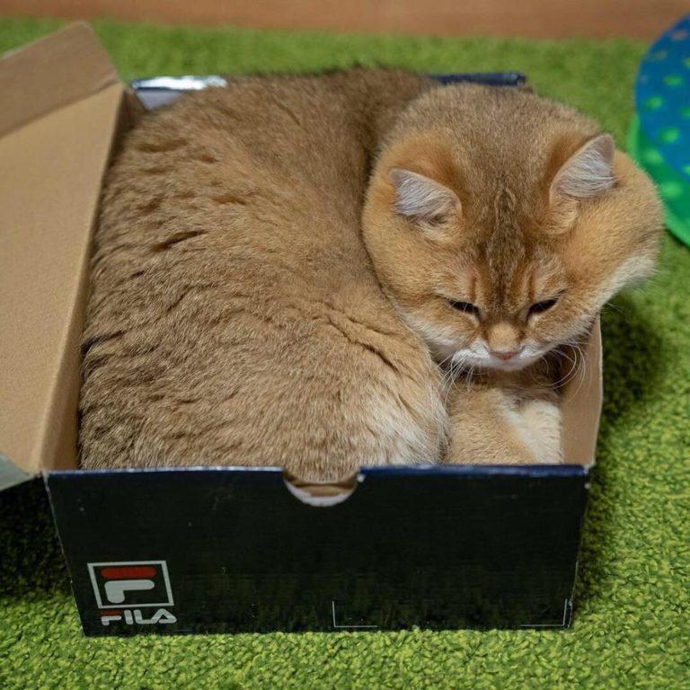 gatto hosico (19)