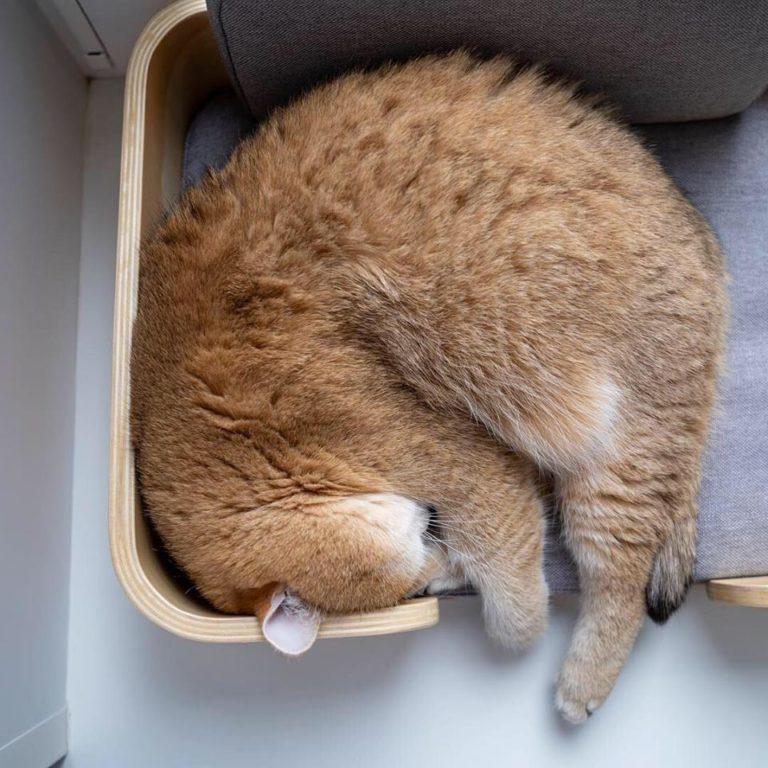 gatto hosico (20)