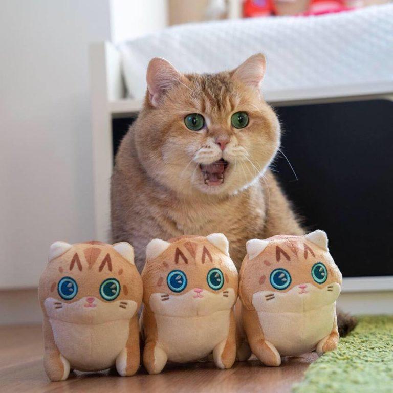 gatto hosico (21)