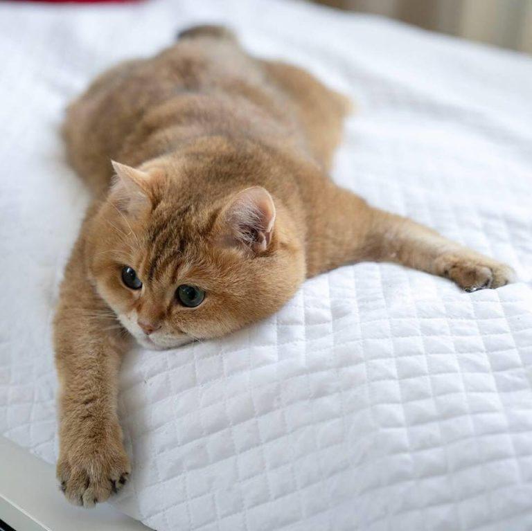 gatto hosico (22)