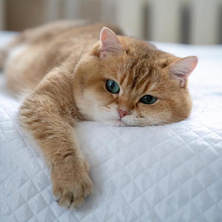gatto hosico (23)