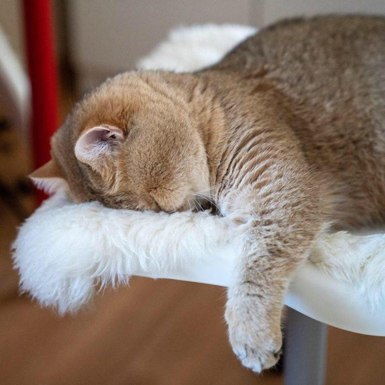 gatto hosico (27)