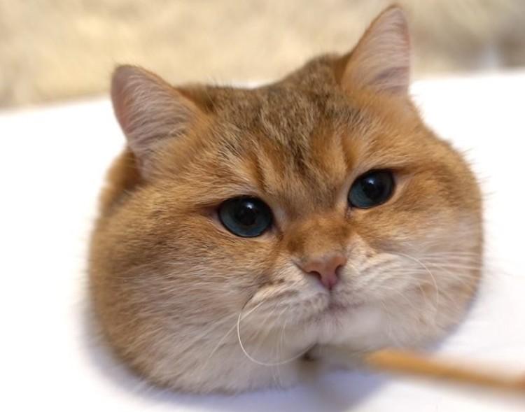 gatto hosico (29)