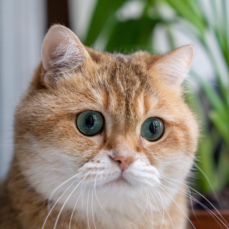 gatto hosico (4)
