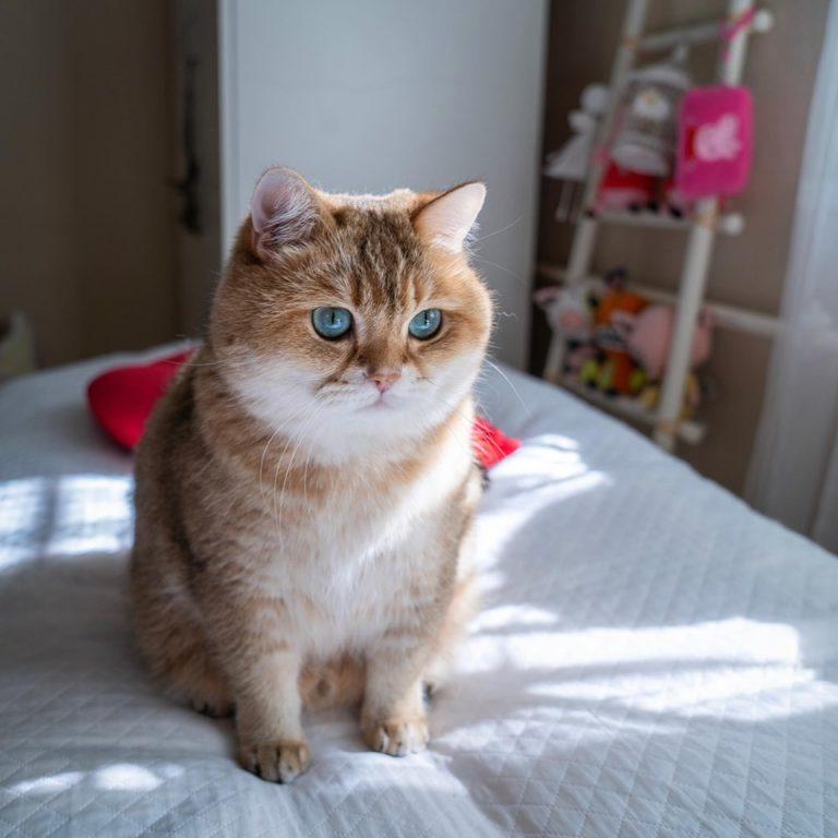 gatto hosico (5)