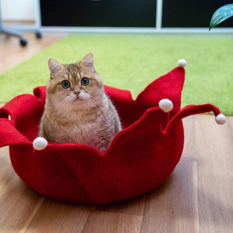 gatto hosico (6)