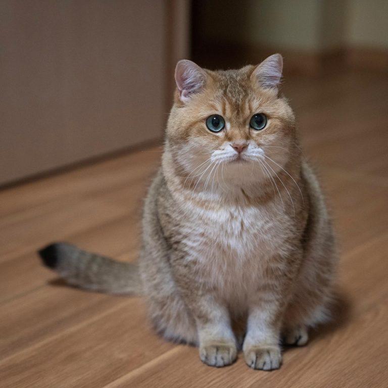 gatto hosico (7)