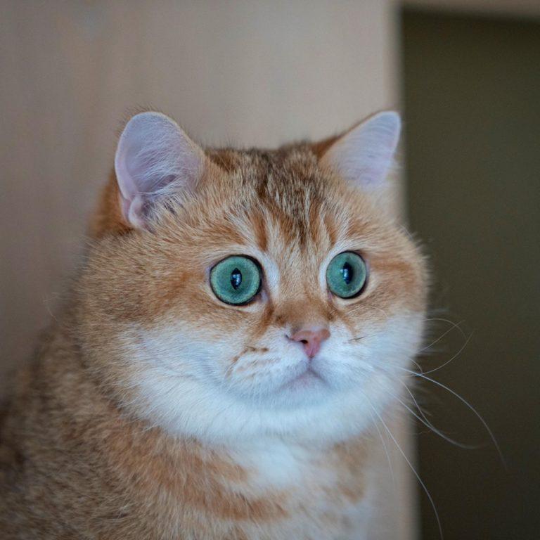 gatto hosico (9)