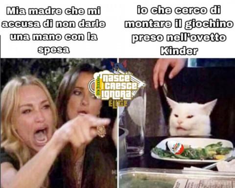 gatto meme (4)