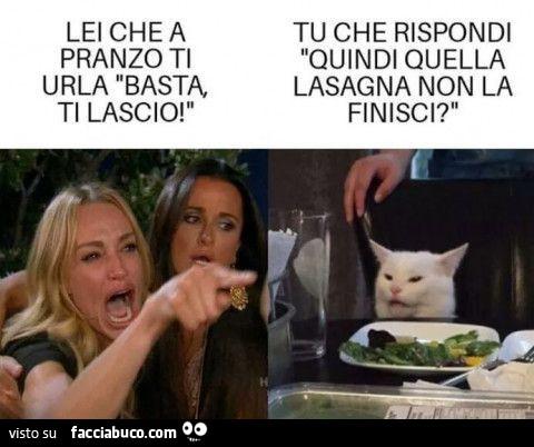 gatto meme (5)