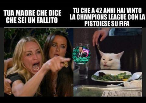 gatto meme (7)