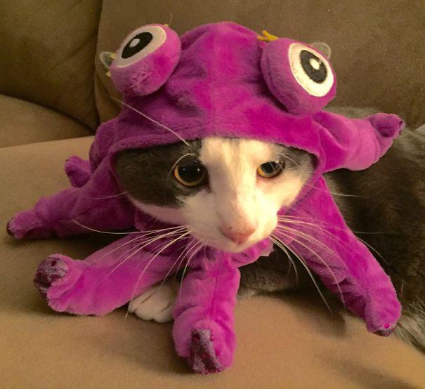 halloween gatti (1)