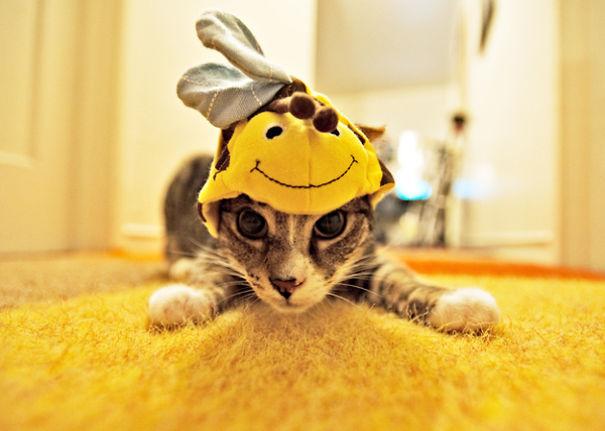 halloween gatti (17)