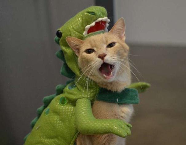 halloween gatti (22)