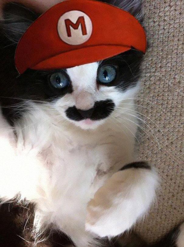 halloween gatti (24)