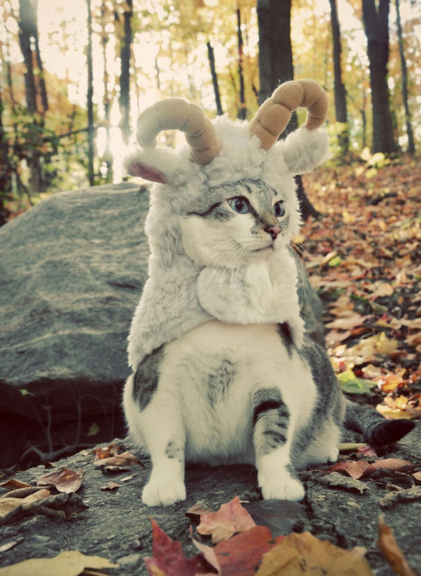 halloween gatti (25)