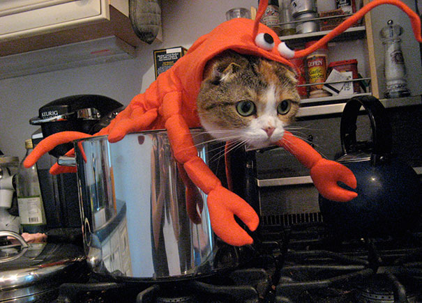 halloween gatti (27)