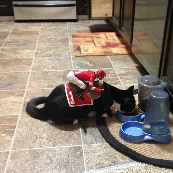halloween gatti (28)